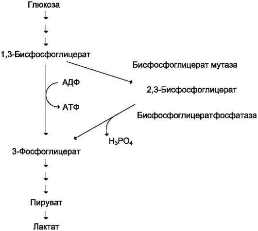 Что такое биохимия для лечения рака